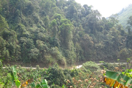 Downhill through the Laos jungle