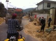 Threshing and winnowing the barley